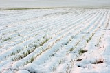 Agricultural field covered by fresh snow poster
