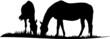 Pferde auf der Weide - 5660983