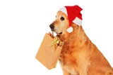 Golden retriever like dog santa claus , which bears presents  poster