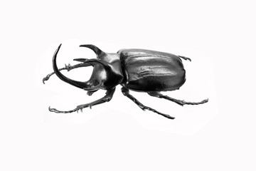 beetle by silver