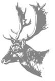 Fototapety cabeça de cervo
