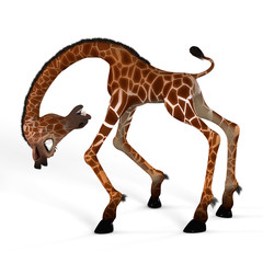 Rendered Image of a giraffe with Clipping Path