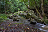 beuatiful rainforest of the world heritage listed border ranges  poster