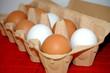 Eier Karton Ostern