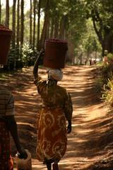 Uganda Coffee plant