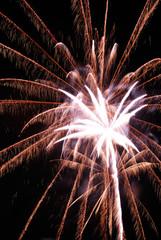 Palm like pattern fireworks