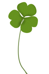 Irish three leaf clover isolated on white