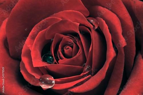 Fototapeta Blütentraum