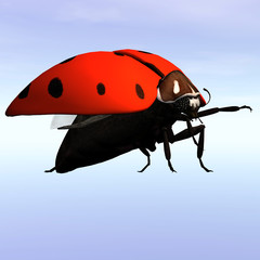 Animal Series - Ladybug.Image contains a Clipping Path