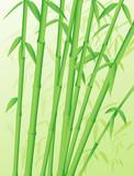 Green forest of bamboo stalks poster
