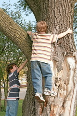 Boys Climbing a Big Tree