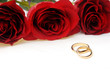 Engagement rings and roses as a symbol of love