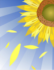 Vector sunflower background macro illustration.