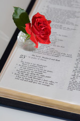 psalm 23 & a rose