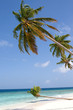 Maldivian sand beach and leaning coconut tree