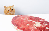 Cat reach the meat and ready to feast poster
