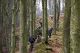 MTB bickers on a Danish winter beech wood road poster
