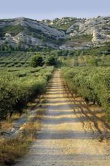 france provence bouches du rhone provence