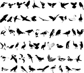 resizable vector birds