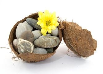 zen spa stones with flowers studio isolated
