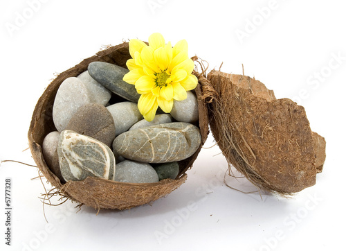 zen spa stones with flowers studio isolated