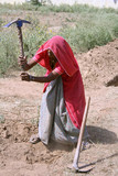 woman working in the fields, rajasthan, india