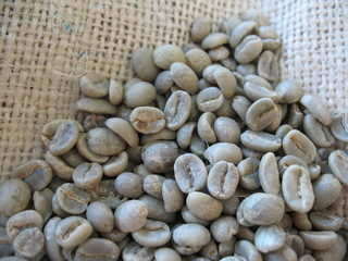 Green Coffee Beans in Burlap Sack