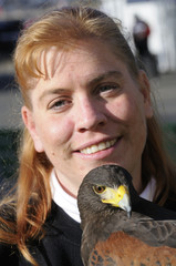 Falconer with a Harris Hawk in closeup