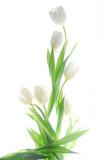Fototapete Blühen - Blüten - Blume