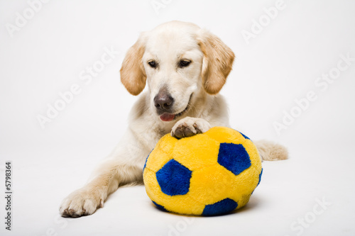Fototapety, obrazy : doggy and his ball