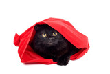 cute black cat hiding in a red bag isolated on white poster