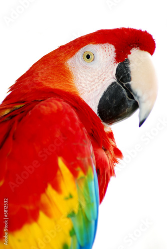Papiers peints Perroquets red macaw