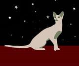 gato no telhado poster