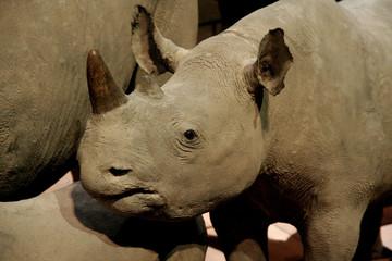 Bébé rhinoceros