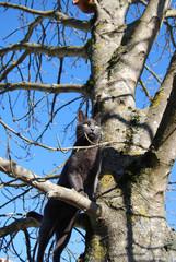 rod in tree