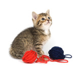 A tabby kitten plays with a ball of yarn on white background. poster