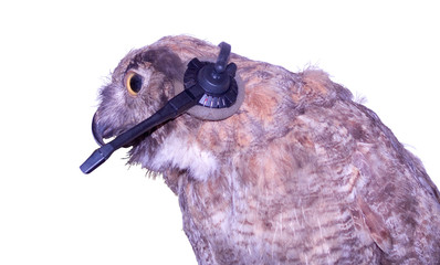 Technical Support Owl