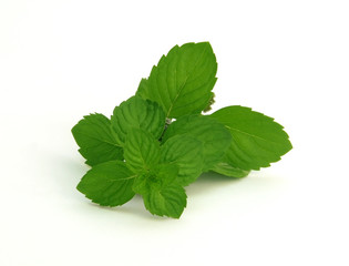 fresh green spearmint  isolated over white background