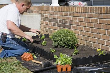 Man planting flowers in garden,