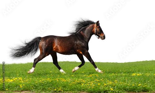 Fototapeten,pferd,reiten,equine,tier
