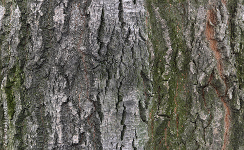tilable bark texture