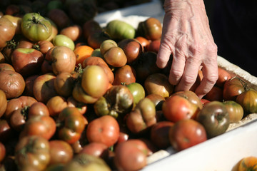 Woman selecting tomatos at a farmer's market