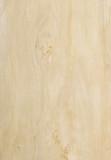 Fototapety poplar wood texture