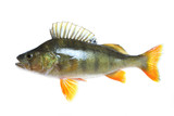 Big Perch isolated over white poster