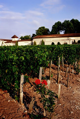 Haut medoc vineyards bordeaux france.
