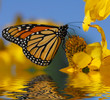 Quadro Monarch butterfly