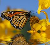 Fototapeta zwierzę - bezkręgowców - Insekt