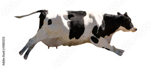 Deurstickers Koe A flying cow isolated on white