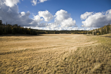 Pastureland - Kaibab National Forest Arizona USA (AB)