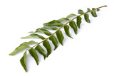 Isolated image of curry leaves. poster